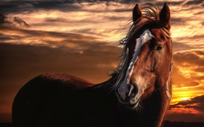 Picture the sky, clouds, sunset, horse, treatment, Horse