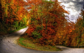 Picture autumn, forest, the sky, clouds, trees, landscape, nature, road