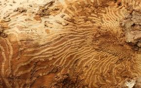 Picture bark, birch, birch, bark, moves
