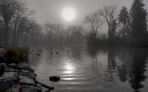 Picture autumn, birds, fog, pond, Park, stones