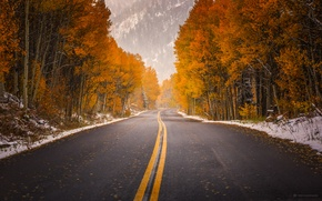 Wallpaper road, autumn, paint, Colorado, USA, in aspen