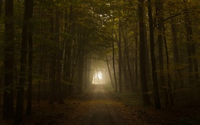Picture road, autumn, light, foliage, tunnel, the road