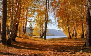 Picture autumn, leaves, trees, mountains, lake, Nature