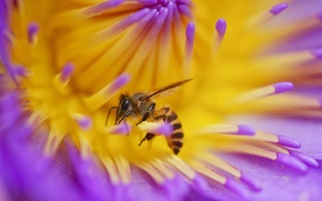 Picture flower, bee, plant, petals, insect