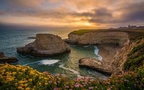 Picture sunset, flowers, rocks, coast, Bay, CA, Pacific Ocean, California, The Pacific ocean, Santa Cruz, Shark …