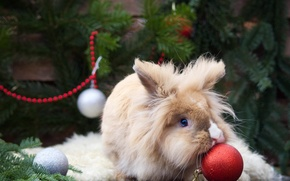 Picture balls, fluffy, rabbit, Christmas decorations