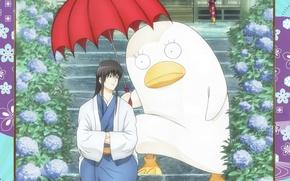 Picture rain, being, umbrella, three, hydrangea, gintama, fins, Gintama, takasugi shinsuke, elizabeth, silver soul, kotaro katsura