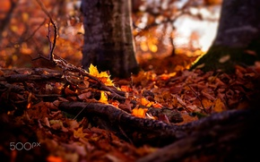 Wallpaper autumn, forest, nature, foliage