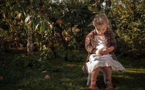 Wallpaper apples, summer, garden, mood, chicken, Apple, girl