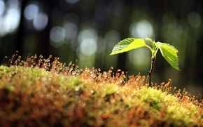 Picture leaves, drops, macro, nature, Rosa, Rostock