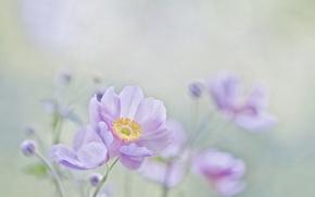 Wallpaper macro, flowers, background, mood