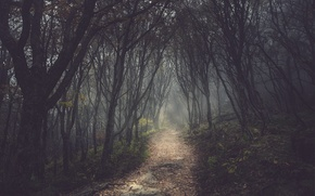 Picture forest, trees, track, alley, path, gloomy