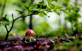 Picture forest, nature, mushroom