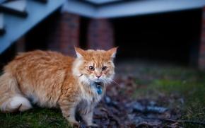 Wallpaper cat, look, background
