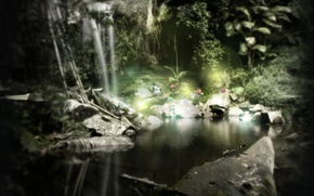 Picture flowers, comfort, tropics, pond, darkness