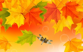 Picture autumn, leaves, collage, dragonfly, insect, maple