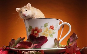 Wallpaper Mouse, Cup, Leaves