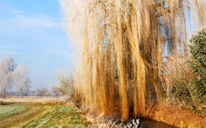 Picture frost, autumn, the sky, grass, IVA