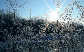 Picture winter, frost, the sun, Trees
