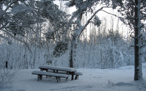 Picture bench, snow, forest, winter