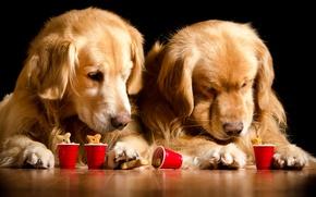 Picture dogs, glass, two, Retriever, Dogs, Retriever