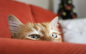 Picture cat, cat, sofa, focus, red, tree, Peeps