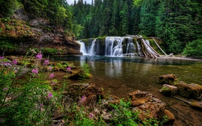 Picture forest, flowers, stones, waterfall, Washington, Washington, Lower Lewis River Falls, river Lewis, Lewis River