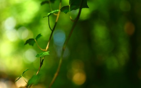 Picture leaves, macro, green, background, tree, widescreen, Wallpaper, blur, branch, leaf, wallpaper, leaves, widescreen, background, full ...