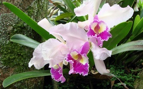 Picture nature, flowers, orchids