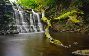 Picture forest, trees, rock, stones, waterfall, stream