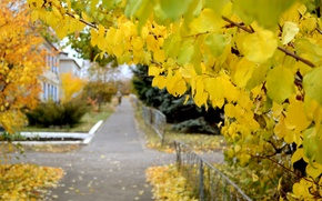 Picture street, yellow leaves, the sidewalk