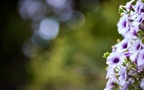 Wallpaper bokeh, macro, summer, flowers, leaves