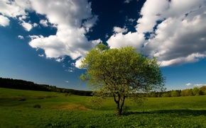 Picture field, forest, the sky, clouds, Tree