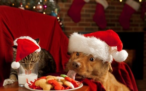 Picture cat, new year, dog, milk