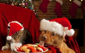 Wallpaper dog, milk, new year, cat