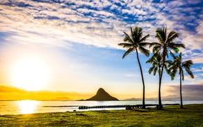 Wallpaper sea, the sky, clouds, tropics, palm trees, dawn, coast, Hawaii, USA