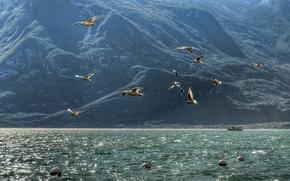 Picture sea, mountains, birds, seagulls
