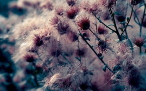 Picture macro, flowers, nature, photo, background, Wallpaper, plants
