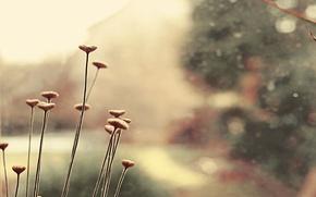 Picture color, macro, flowers, plant, gentle
