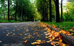 Picture road, autumn, leaves, trees, nature, Park, Nature, falling leaves, road, trees, yellow, park, yellow, autumn, …