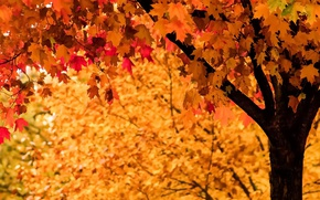 Picture autumn, leaves, tree