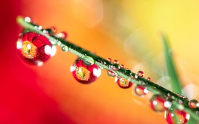Picture grass, water, drops, sheet, Rosa, reflection