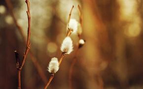 Picture macro, background, Verba, seals, spring