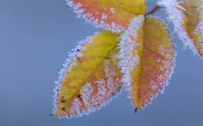 Picture frost, autumn, leaves, crystals