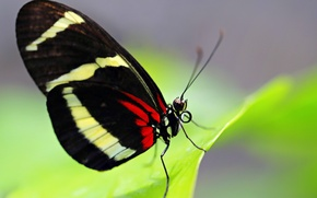 Picture butterfly, wings, insect, moth