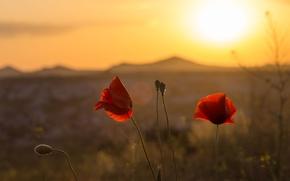 Picture flower, the sun, flowers, background, widescreen, Wallpaper, plant, Mac, blur, wallpaper, flowers, widescreen, flowers, background, …