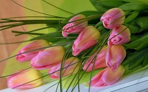 Picture pink, bouquet, tulips
