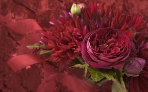 Picture purple, leaves, macro, flowers, bouquet, petals, flowers, Burgundy, raspberry