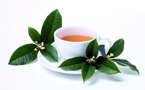 Picture leaves, tea, Cup