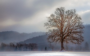 Picture winter, tree, fog, hills, freeze, branches, cold, mist, frost
